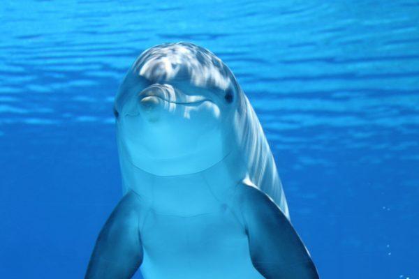 Dolphin world Makadi Bay